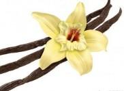 Salon Studio de Frumusete Vanilla